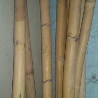 Bamboo Pole approx 3cm thick $14 per metre
